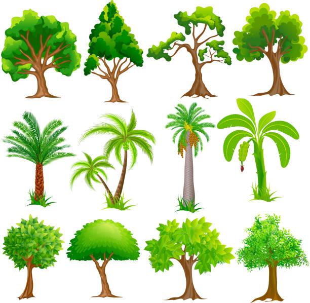 Baum-Kollektion – Vektorgrafik