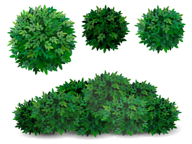 tree crown foliage bush - куст stock illustrations