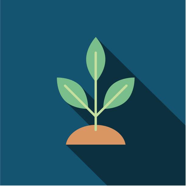 Tree Environment Flat Design Icon Tree Environment Icon in thin line flat design style. sapling stock illustrations