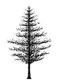 tree forest hand drawing sketch vector illustration design