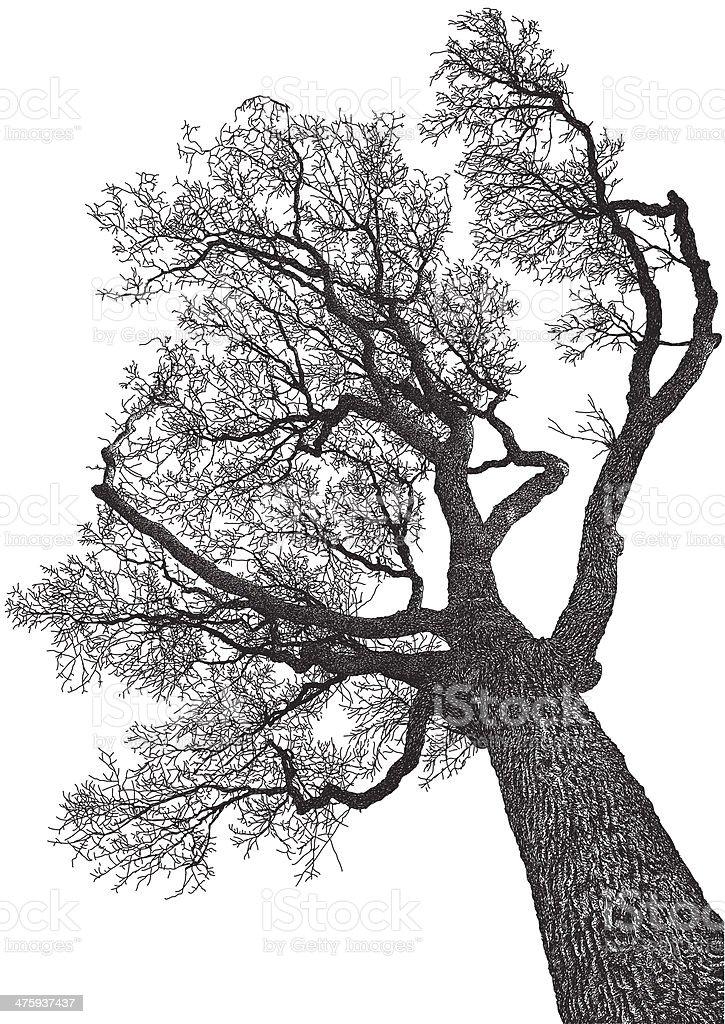 Tree from below vector art illustration
