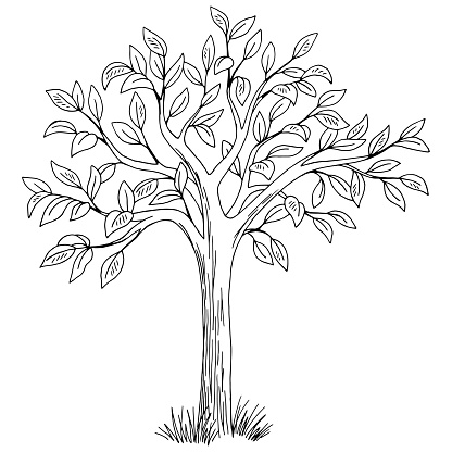 Tree graphic black white isolated sketch illustration vector