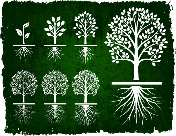 Tree Growing Green Grunge royalty free vector icon set Tree Growing Green Grunge icon set root hair stock illustrations