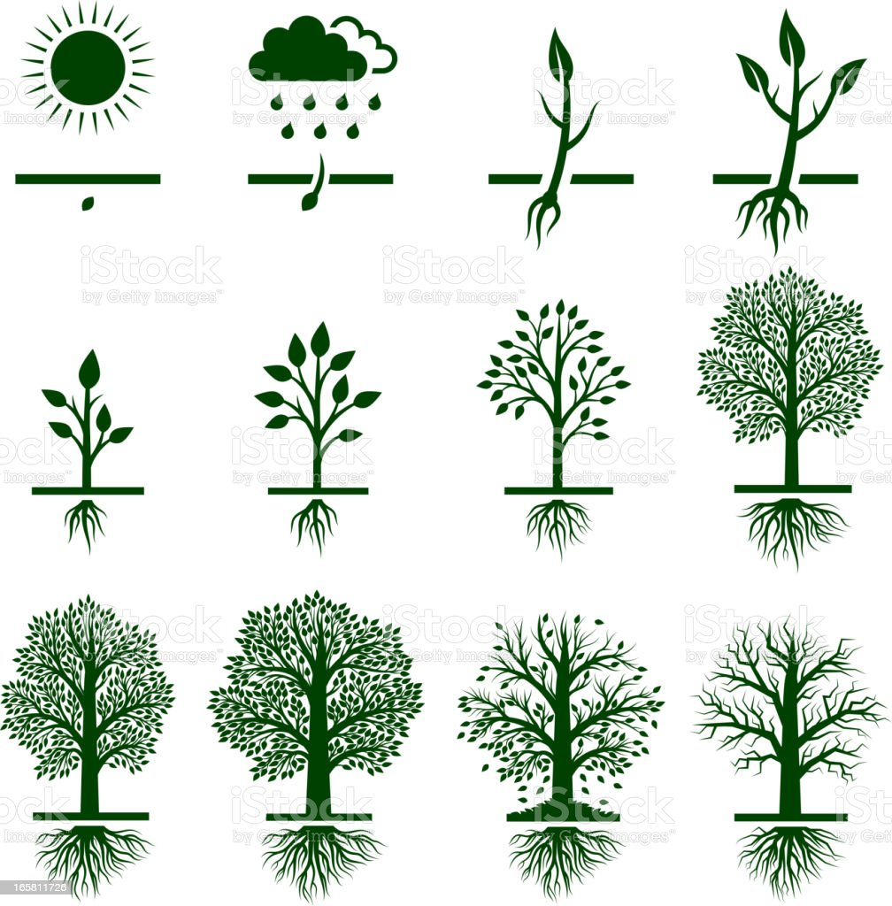 Tree Growing growth life cycle royalty free vector icon set vector art illustration