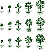 Tree Growing royalty free vector interface icon set. This editable vector file growing tree icons icons on white Background. The interface icons are organized in rows and can be used as app interface icons, online as internet web buttons, and in digital and print.