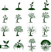 Tree Growing Process