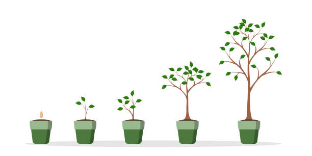 Tree growing set. Tree growing set. Green plant in the pot on white. sapling stock illustrations