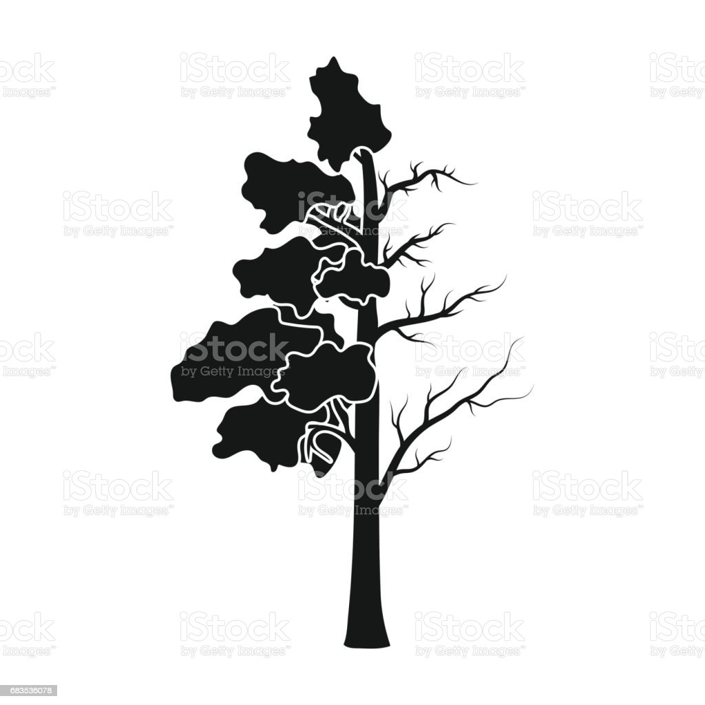 Tree Half Full Of Green Leaf And Half Dry Icon In Black Style