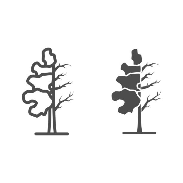 Tree half full of green leaf line and solid icon, changes depending on conditions concept, tree sign on white background, tree half dry icon in outline style for mobile concept. Vector graphics. Tree half full of green leaf line and solid icon, changes depending on conditions concept, tree sign on white background, tree half dry icon in outline style for mobile concept. Vector graphics autumn clipart stock illustrations