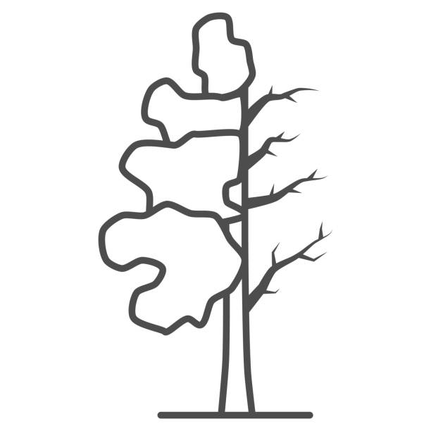 Tree half full of green leaf thin line icon, changes depending on conditions concept, tree sign on white background, tree half dry icon in outline style for mobile concept. Vector graphics. Tree half full of green leaf thin line icon, changes depending on conditions concept, tree sign on white background, tree half dry icon in outline style for mobile concept. Vector graphics autumn clipart stock illustrations