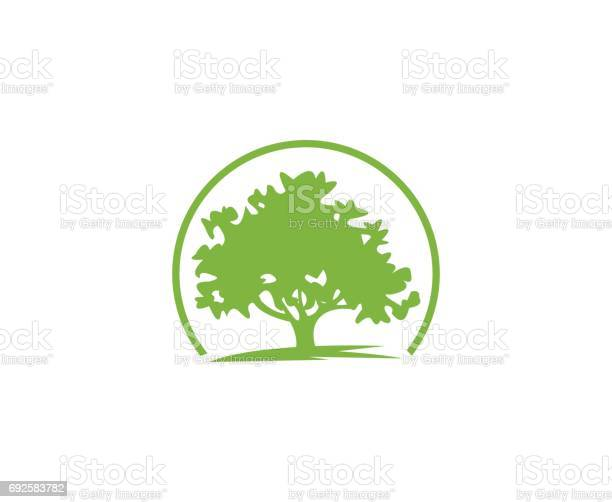 Tree icon vector id692583782?b=1&k=6&m=692583782&s=612x612&h=m2yrsgtkckf o5fe8fs9rqyv9fenixi vxlmhqrrhp8=