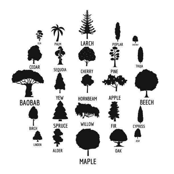 baum icons set, einfachen stil - buchenholz stock-grafiken, -clipart, -cartoons und -symbole