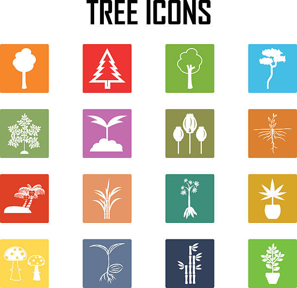 baum icons set. vektor-illustration. - maniok stock-grafiken, -clipart, -cartoons und -symbole