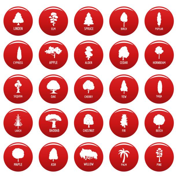 baum-ikonen stellen vetor rot - buchenholz stock-grafiken, -clipart, -cartoons und -symbole
