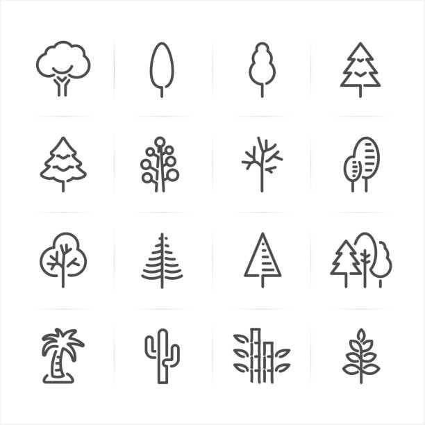 Tree icons Tree icons with White Background pine tree stock illustrations