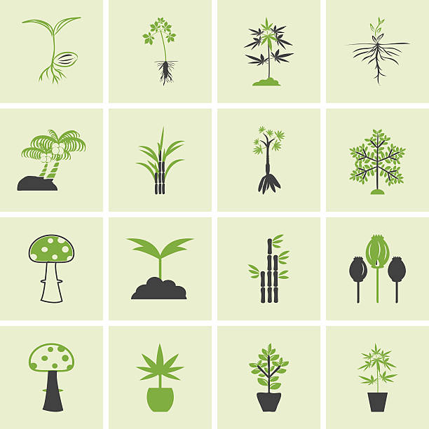 tree icons vector set. - maniok stock-grafiken, -clipart, -cartoons und -symbole