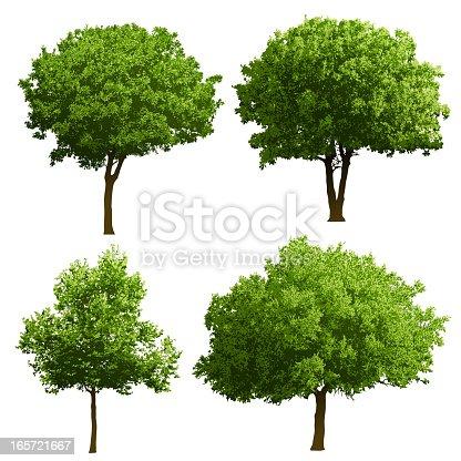 istock Tree Illustrations 165721667