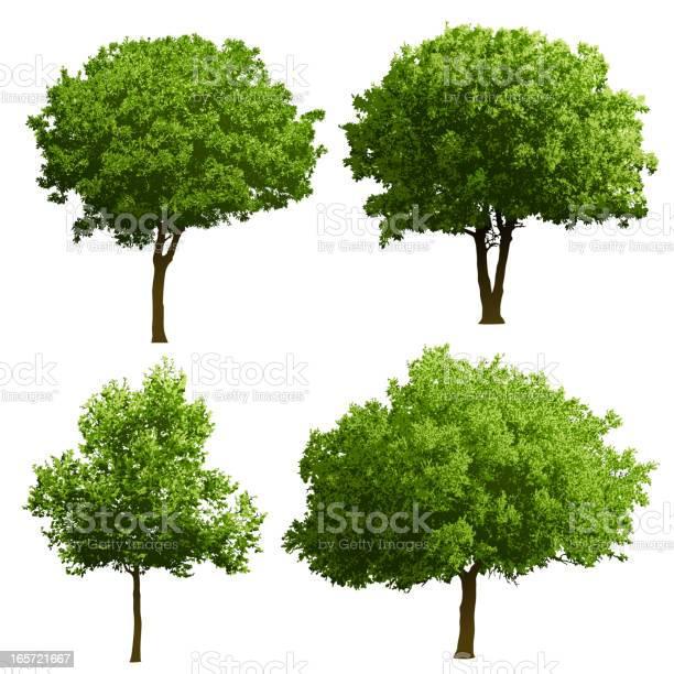 Tree illustrations vector id165721667?b=1&k=6&m=165721667&s=612x612&h=w5ar86smdbx8lpzlyzgqmfeduhzlwvbasgrs0rdyqew=
