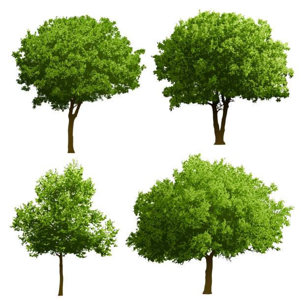 ilustraciones, imágenes clip art, dibujos animados e iconos de stock de árbol de ilustraciones - árbol