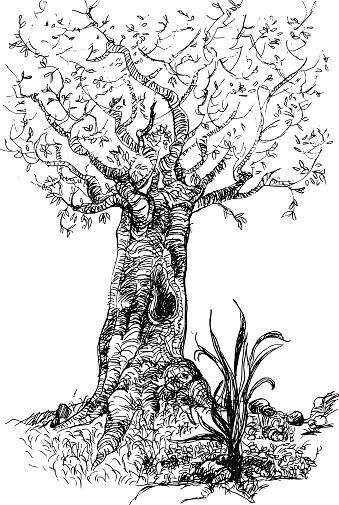 Tree in autumn / autumn tree