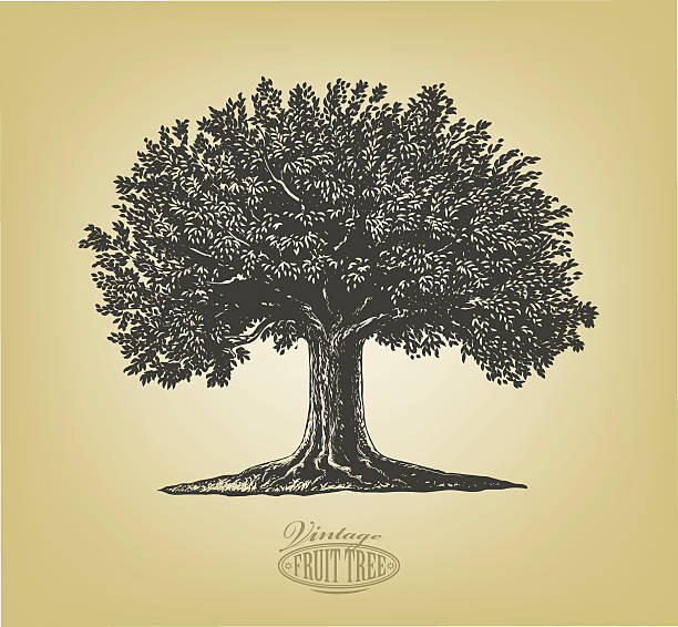 Tree in engraving style Vector illustration of a fruit tree in vintage engraving style. Isolated, grouped. engraved image stock illustrations