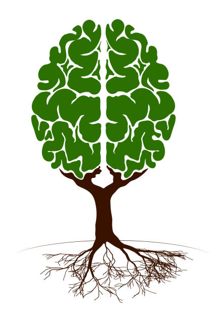 Download Best Tree Brain Illustrations, Royalty-Free Vector ...