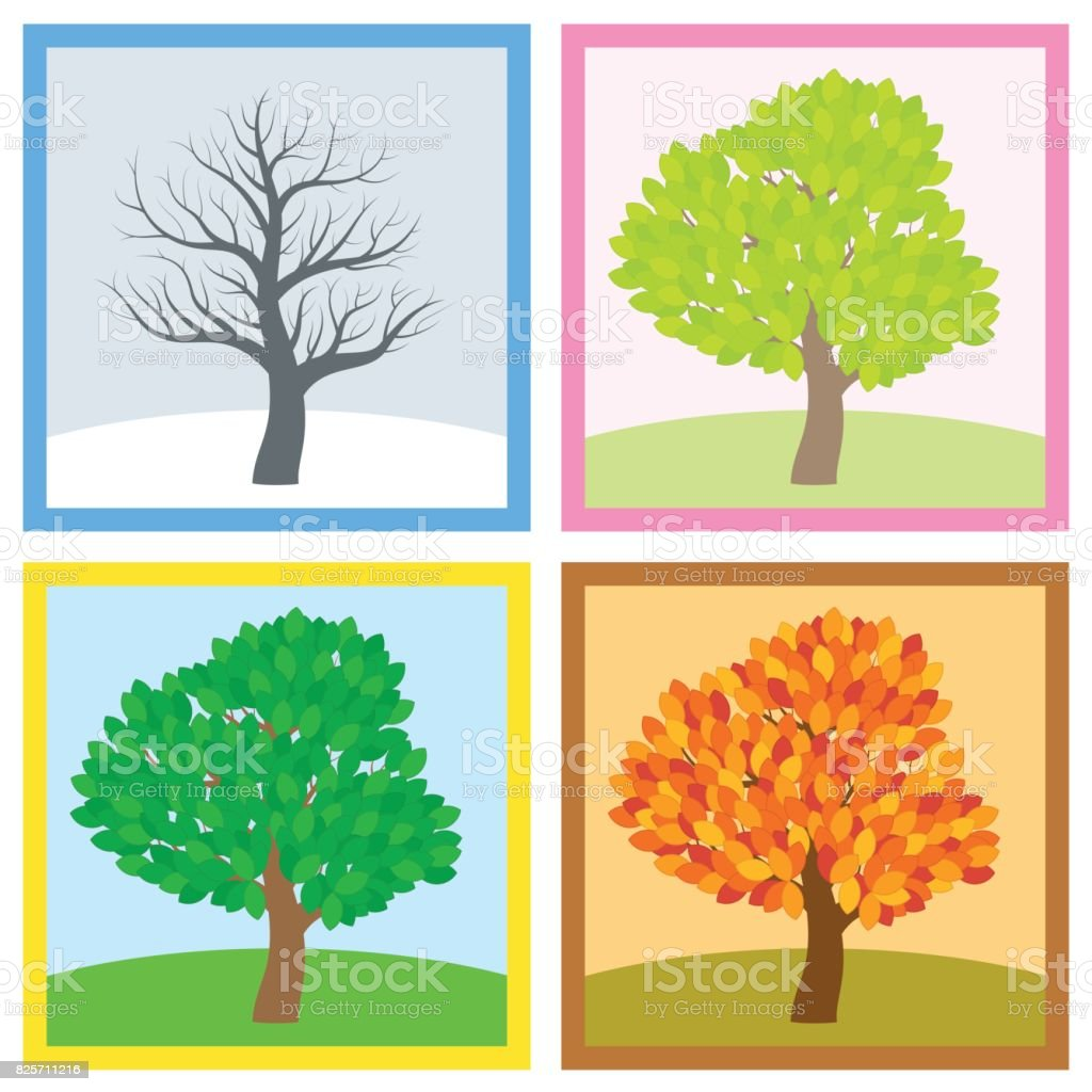 arbre en hiver printemps t et automne feuillage diff rent en typiques couleurs et nuances. Black Bedroom Furniture Sets. Home Design Ideas