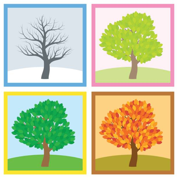 tree in winter, spring, summer and fall with different foliage in typical colors and shades while the leaves turn throughout the course of a year. vector illustration. - four seasons stock illustrations