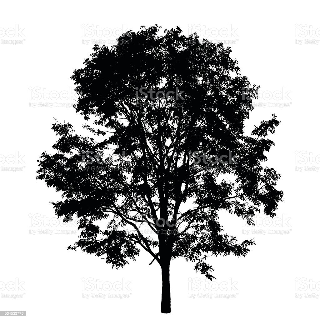 Tree isolated on white background vector art illustration