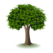 Vector illustration of Tree isolated on white background