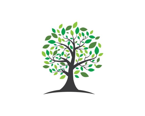 ilustrações, clipart, desenhos animados e ícones de design de logotipo de vetor de folha de árvore - tree
