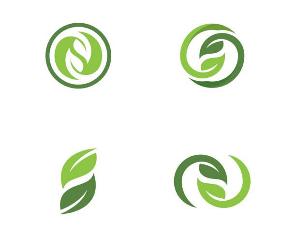 stockillustraties, clipart, cartoons en iconen met boom blad vector logo ontwerp - pinaceae