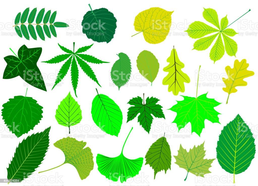 tree leaves green set, vector art illustration