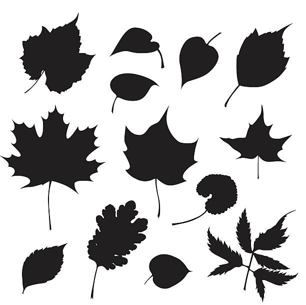 Tree Leaves A vector silhouette illustration of various leaves in black on a white background. maple leaf illustrations stock illustrations