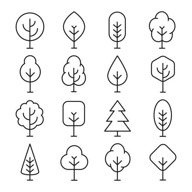 illustrazioni stock, clip art, cartoni animati e icone di tendenza di tree line icon - albero