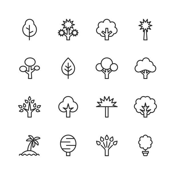ilustraciones, imágenes clip art, dibujos animados e iconos de stock de iconos de línea de árbol. trazo editable. píxel perfecto. para móviles y web. contiene iconos como árbol, bosque, naturaleza, al aire libre, medio ambiente, ecología. - árbol