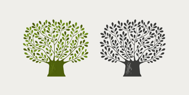 baum-logo oder symbol. natur, ökologie, umwelt-symbol. vektor-illustration - stammbäume stock-grafiken, -clipart, -cartoons und -symbole