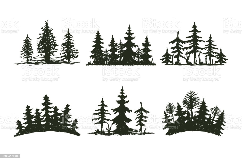 Tree outdoor travel black silhouette coniferous natural badge, tops pine spruce branch cedar and plant leaf abstract stem drawing vector illustration vector art illustration