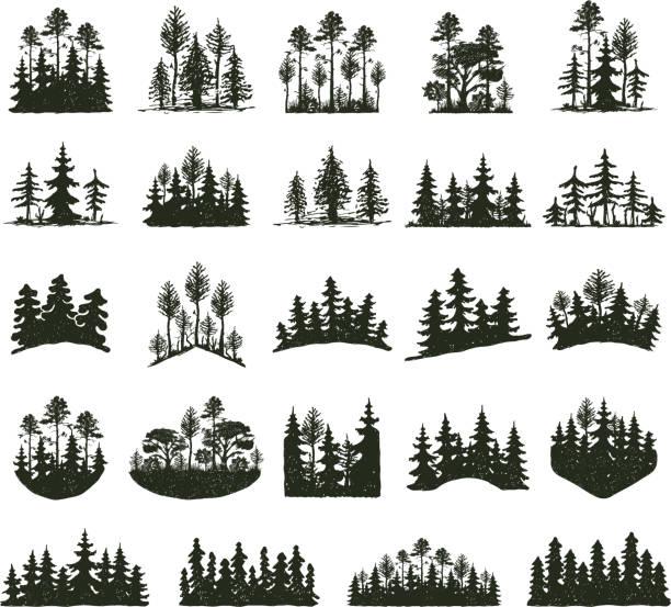 bildbanksillustrationer, clip art samt tecknat material och ikoner med träd utomhus resa svart siluett - forest
