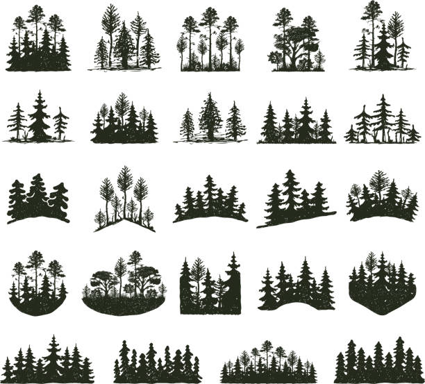 Tree outdoor travel black silhouette Tree outdoor travel black silhouette coniferous natural badges, tops pine spruce branch cedar and plant leaf abstract stem drawing vector illustration. Panorama scene horizon decoration. pine tree stock illustrations