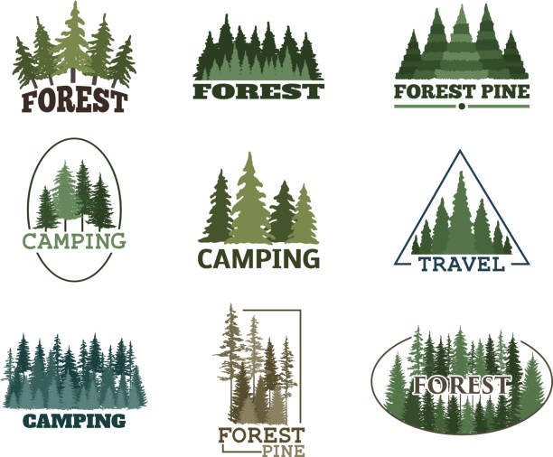 bildbanksillustrationer, clip art samt tecknat material och ikoner med träd utomhus resa grön siluett skog badge barrträd naturliga logotyp badge toppar tall gran vektor - gran