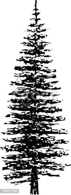 Tree - picea pungens argentea - .EPS, traced black ink.