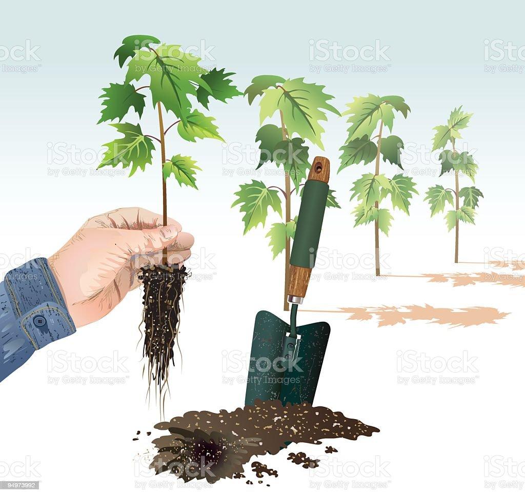 Tree Planting royalty-free stock vector art