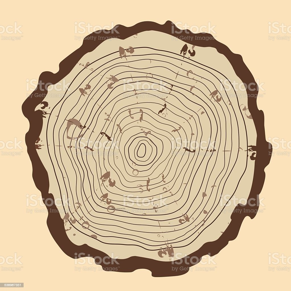 Diagram Of A Tree Trunk