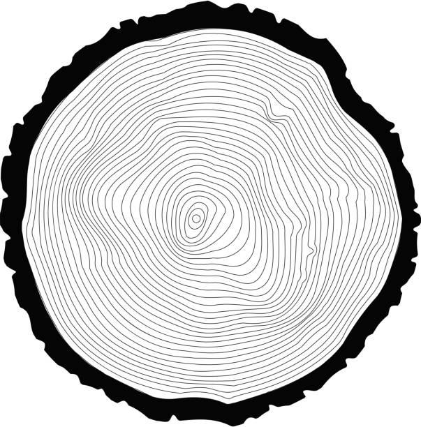 Best Tree Trunk Illustrations, Royalty-Free Vector ...