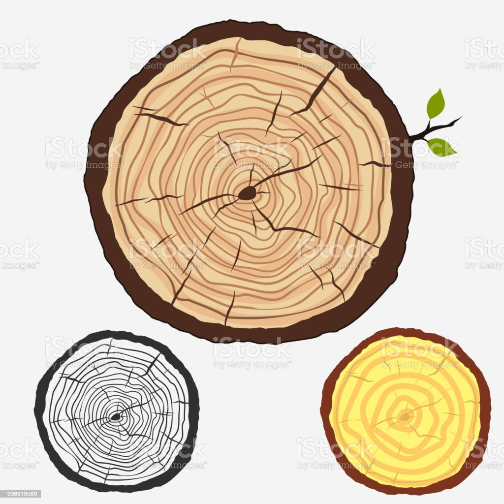 wood tree stock i texture photo isolated vector illustration ring wooden trunk rings