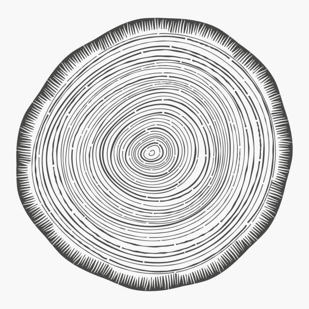 Tree Rings Wood tree rings growth rings slice of wood grain. woodland stock illustrations