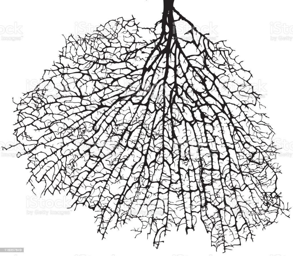 Tree Root vector art illustration