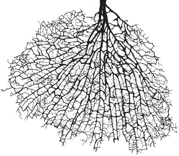 506 Fractal Tree Illustrations & Clip Art - iStock