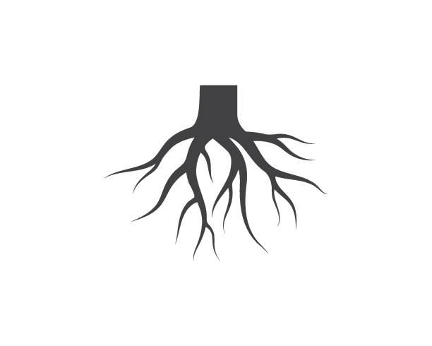 illustrazioni stock, clip art, cartoni animati e icone di tendenza di tree roots vector icon illustration design - radice